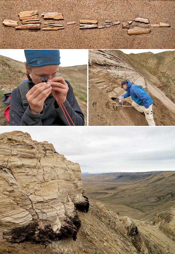 Collage de photos : Des os fossiles déposés sur le sable. Natalia Rybczynski examine un petit os fossile avec une loupe. Un homme creuse un trou sur une pente sableuse. Un affleurement rocheux en avant-plan de collines.