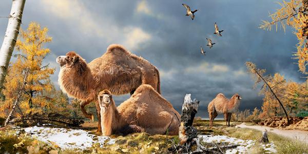Illustration montrant trois chameaux et quatre oiseaux en vol, dans un paysage parsemé d'arbres.
