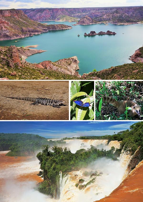 Collage de photos : Un lac entouré de montagnes, un grand lézard, un papillon bleu, un coati à queue annelée et une immense chute.