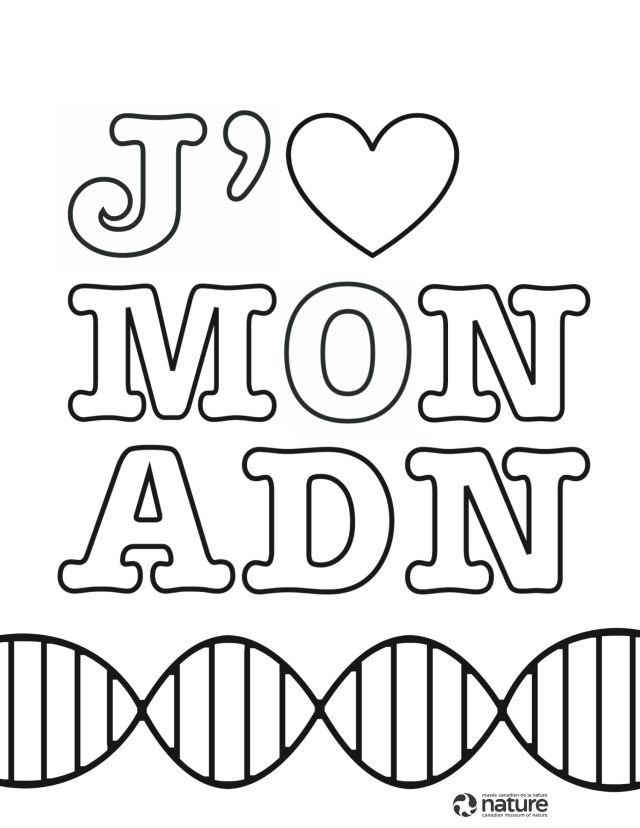 Texte à colorier : J'aime mon ADN.