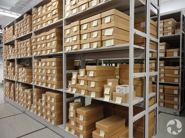 Rangées de boîtes de chaussures contenant des membranes tympaniques de baleines.