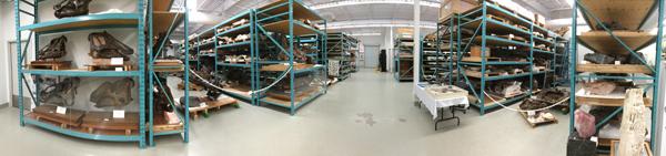 Une image panoramique montrant des fossiles sur des étagères.