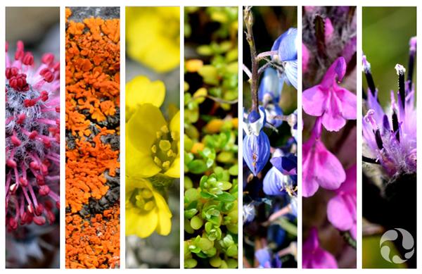 Collage de photos montrant diverses fleurs colorées de l'Arctique.