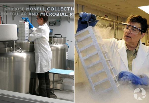Collage: Deux personnes travaillant dans la collection.