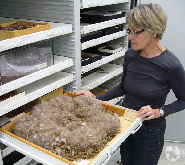 Une femme tient un plateau contenant un nid dont le diamètre est d'environ 50 cm.