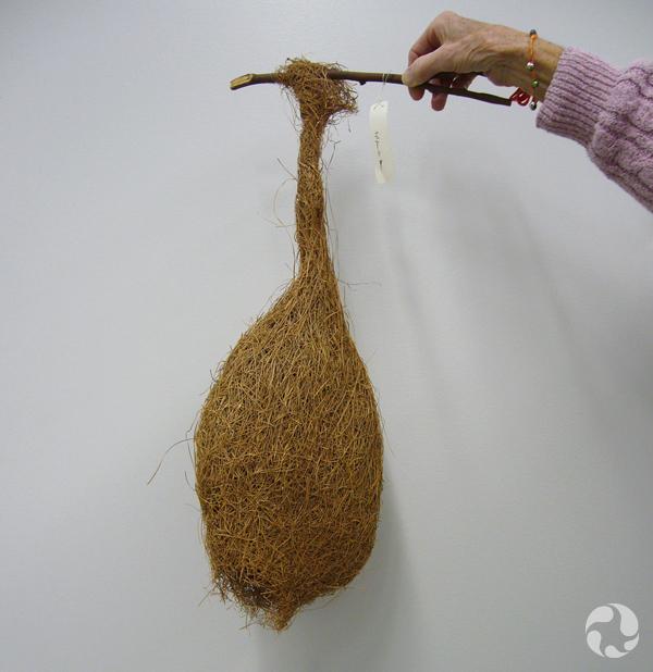 Nid de la forme et de la grosseur d'un ballon de football pendu à un bout de branche.