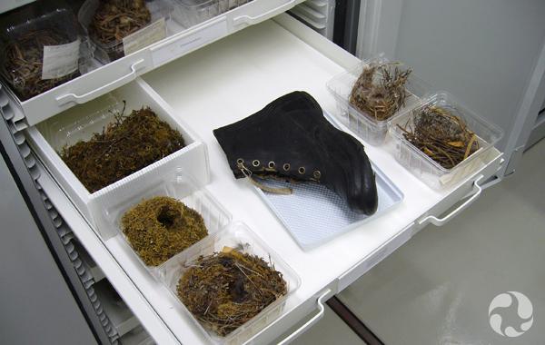 Plateau comptant six nids dont un dans une bottine.