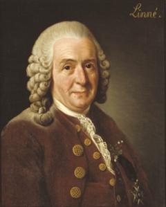 Un portrait de Carl Linné.