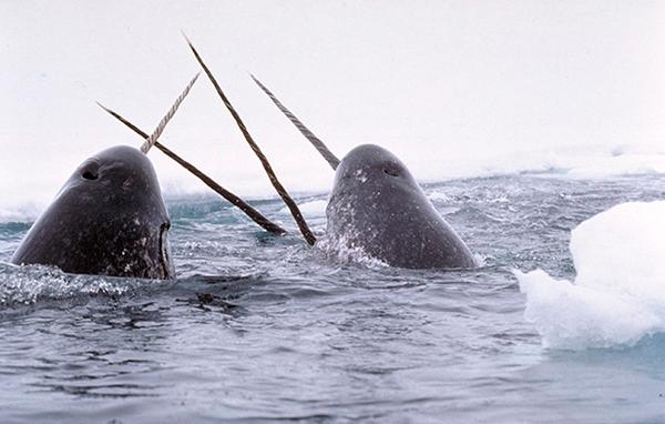 Un groupe de navals dont la défense pointe hors de l'eau.