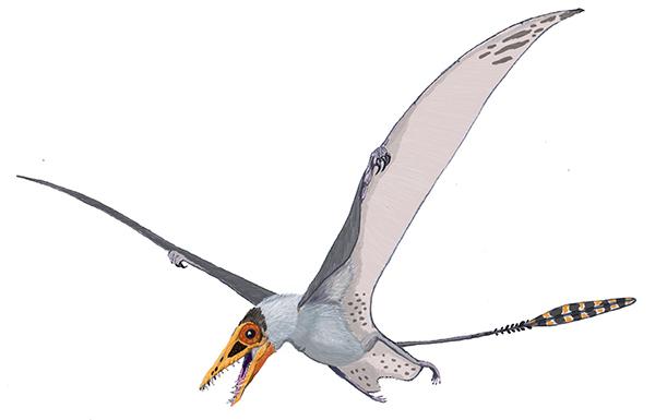 Illustration d'un ptérosaure du genre Sordes.