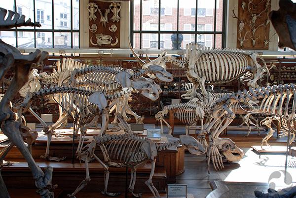 Plusieurs squelettes entassés dans une pièce.