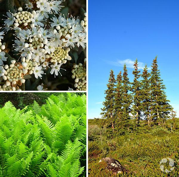 Collage de trois espèces de plantes.