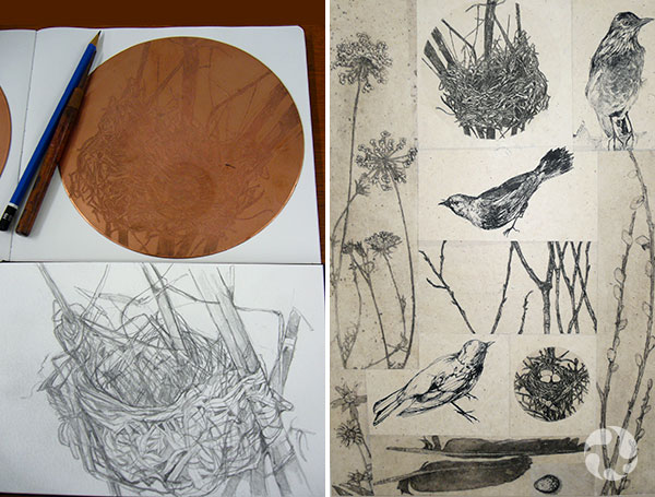 Collage of nest, bird and plant images
