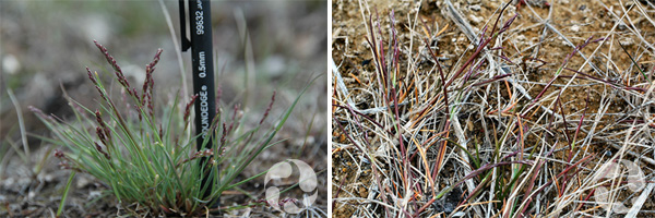 Collage de deux espèces de plantes.