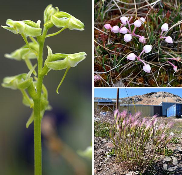 Collage de trois plantes.
