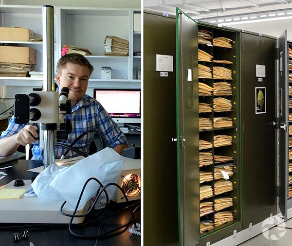 Collage : À gauche, homme assis derrière un microscope. À droite, feuilles d'un herbier classées dans une armoire.