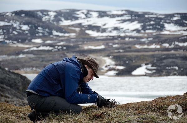 Un homme collecte des plantes au milieu de collines arctiques portant des plaques de glace.