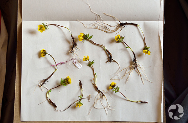 Several stems on a piece of paper.
