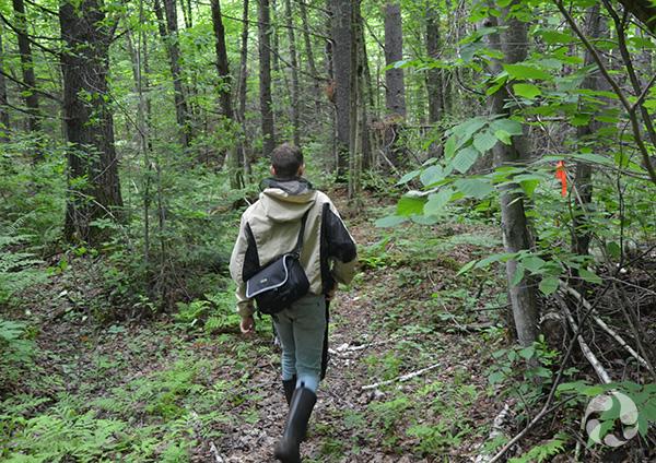 Un homme marche dans la forêt.