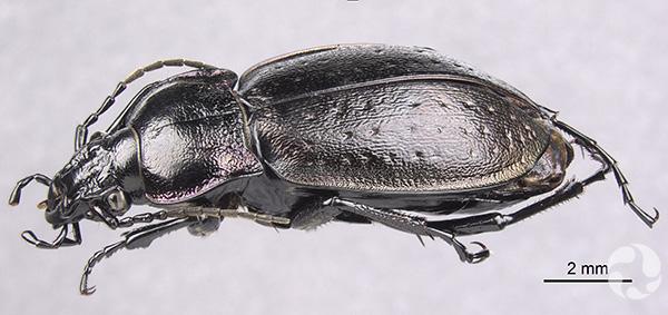 Plan rapproché d'un insecte noir.