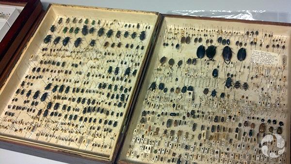 Des insectes épinglés dans des boîtes de collection.