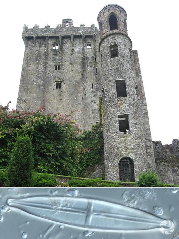 Collage: Château de Blarney et une diatomée.
