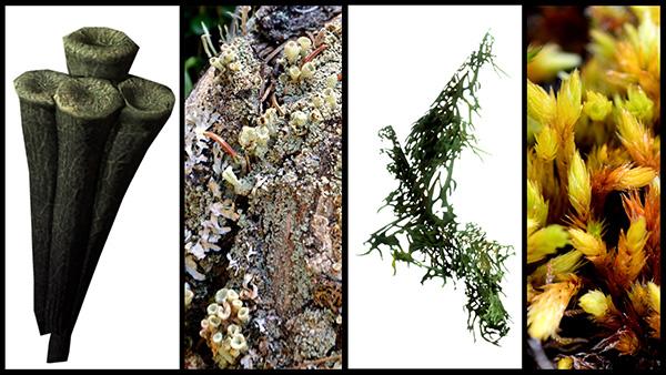 Photos d'un lichen et d'une mousse, en parallèle avec les images correspondantes d'un jeu vidéo.