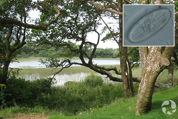 Collage : un lac bordé d'arbres à l'avant-plan et la photo au microscope d'une diatomée.