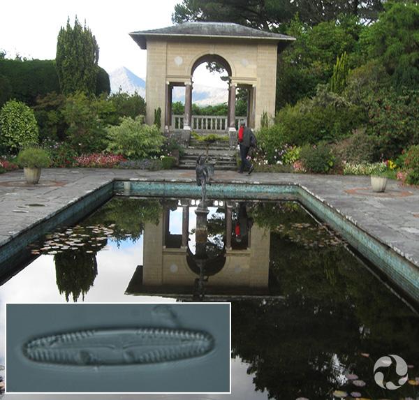 Collage : un bassin d'eau rectangulaire avec un pavillon à l'arrière-plan; une diatomée grossie au microscope.