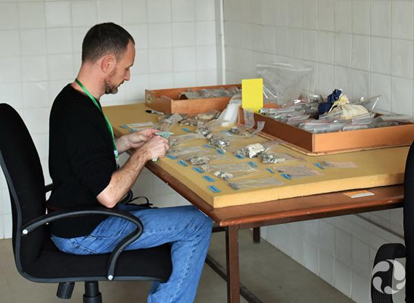 Scott Rufolo assis à une table, examinant des poissons fossiles.
