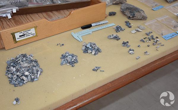 Des amoncellements de poissons fossiles sur une table.