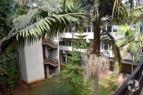 Vue des arbres dans une cour intérieure, entourée d'un bâtiment aux murs blancs.