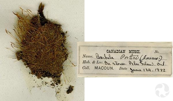 Gros plan d'un spécimen de mousse et d'une étiquette de collection de 1882.