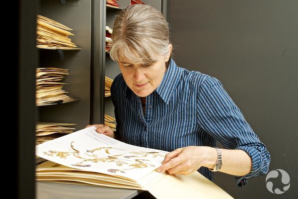 Jennifer Doubt observe une plante conservée à plat sur une feuille.