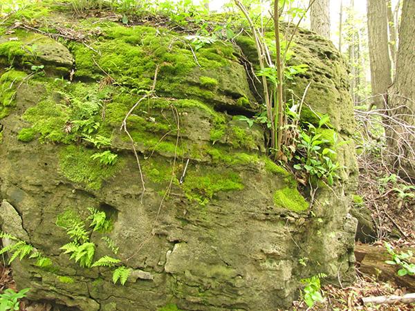 Un affleurement rocheux recouvert de mousses.