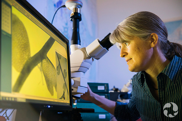 Jennifer Doubt observe l'image grossie d'une plante à l'écran.