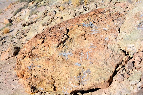 Des lichens sur un rocher.