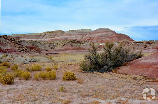 Un arbuste dans un désert.