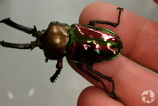Un insecte s'accroche au doigt d'un homme.