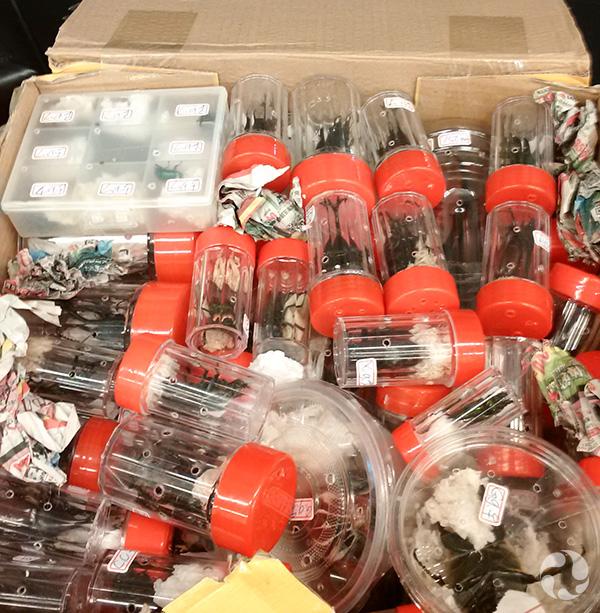 Le carton de transport ouvert contenant des boîtes et des tubes transparents abritant chaque insecte individuellement.