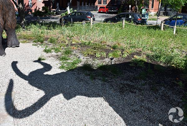 L'ombre d'un mammouth de Sibérie à côté d'une platebande de plantes.
