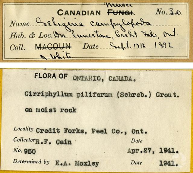 Collage de deux étiquettes identifiant des spécimens.