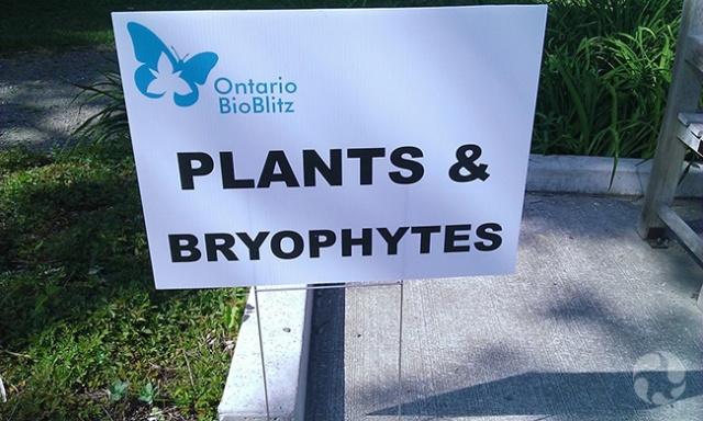 Une pancarte sur laquelle il est écrit : Plantes & bryophytes.