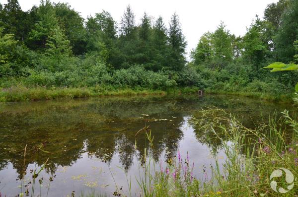 Un étang entouré de végétation.