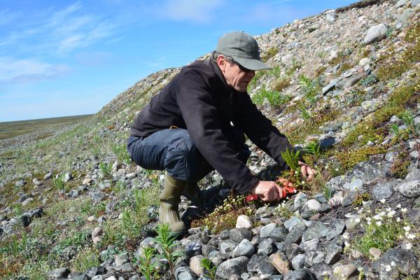 Un chercheur accroupi sur un versant en train de collecter des fougères.
