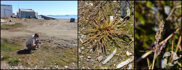 Montage d'images montrant une personne accroupie qui prend une photo ainsi que des spécimens de plantes.