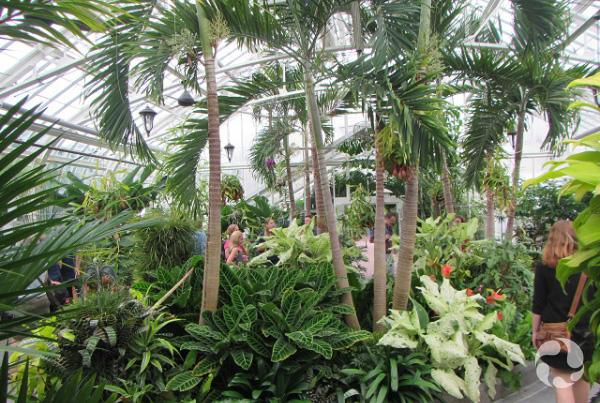 Des palmiers dans une serre.