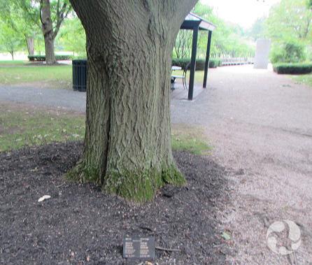 Le tronc massif d'un arbre.