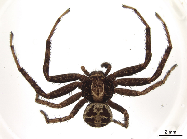 Plan rapproché, vu de haut d'une araignée.