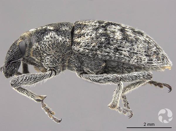 Un insecte.